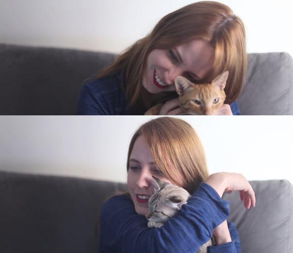 meus-gatos-andressa-roeder