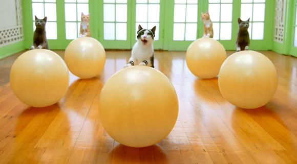 academia-de-gatos