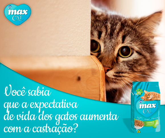 castrar-gatos-max-cat-