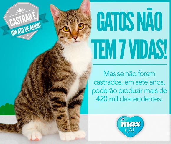 gatos-não-tem-7-vidas
