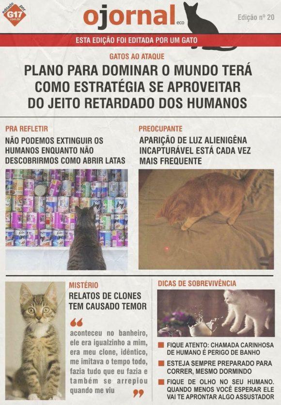 jornal dos gatos